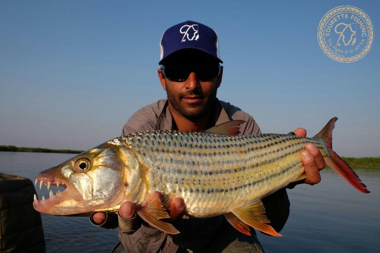 okavango-barbel-run-tigerfish-season-2016-week-3-tourette-fishing-blog-beautiful-tigerfish