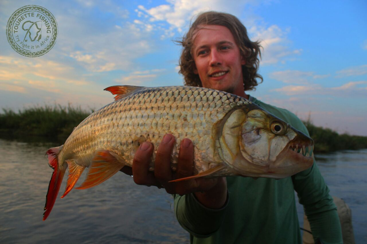 okavango-barbel-run-tigerfish-season-2016-group-4-tourette-fishing-blog-johann