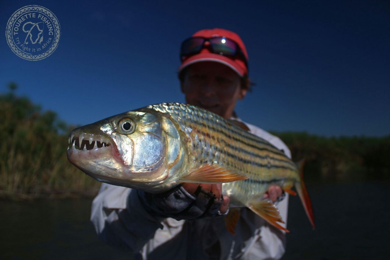 okavango-barbel-run-tigerfish-season-2016-group-4-tourette-fishing-blog-tigerfish-time