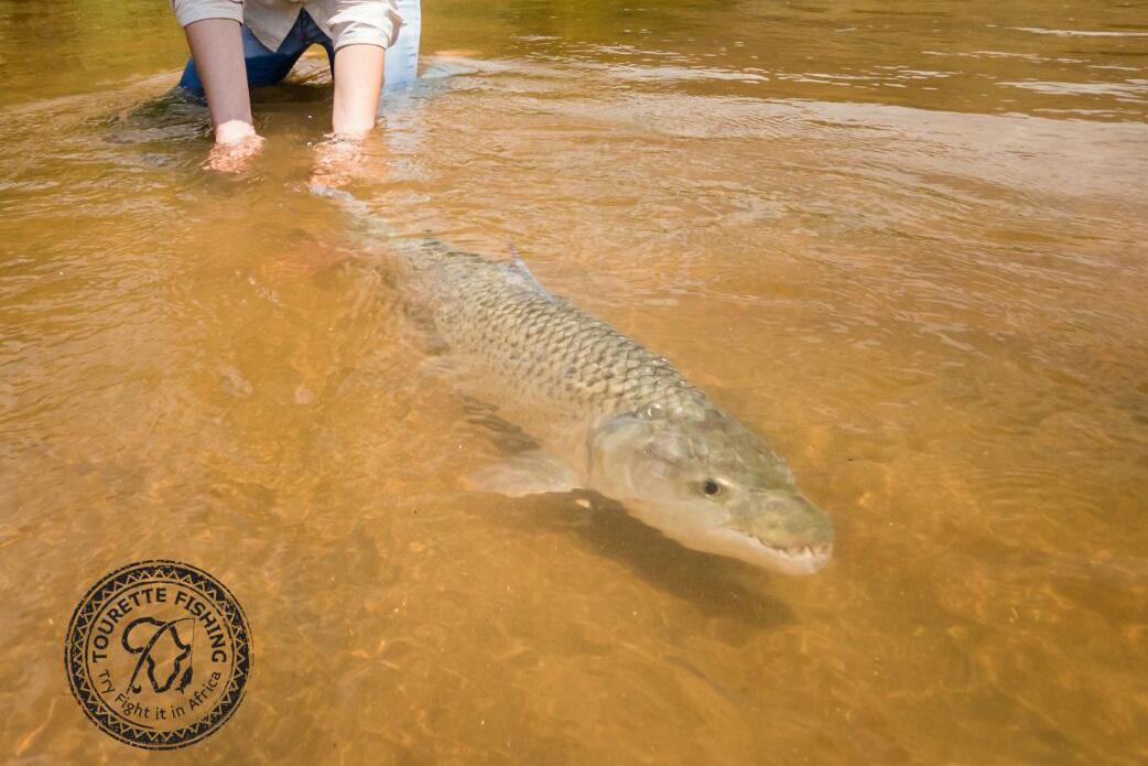tanzania-tigerfish-season-2016-week-2-tourette-fishing-blog-fish