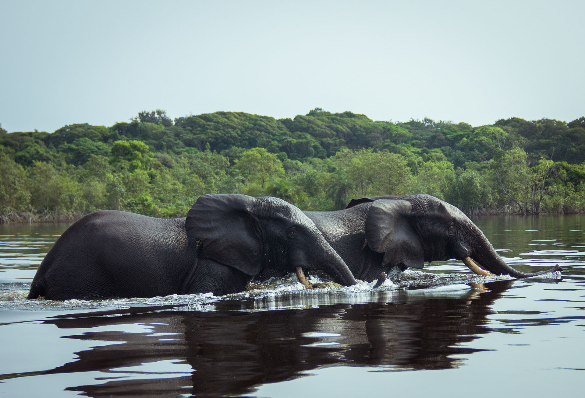 african-waters-team-deeply-committed-to-conservation-and-community-sport-fishermen-contribute-to-ensuring-loango-national-park-gabon-elephants