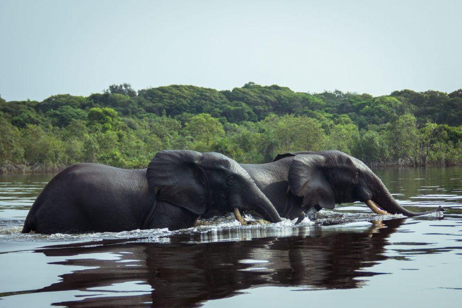 conservation african-waters-cast-connect-conserve-gabon-elephants